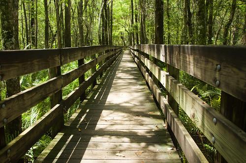 nature botanical outdoors florida boardwalk infocus highquality ecopreserve elementsorganizer