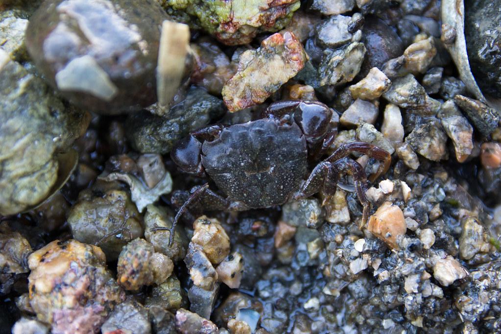 Mister Crabs at Shodoshima