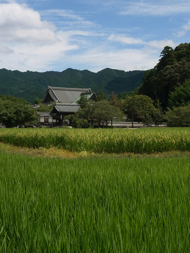Tachibana-temple and rice fields.