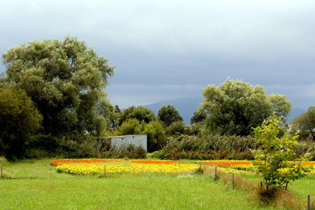 Para la batalla de flores de Laredo