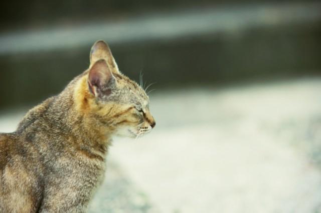 cat (75)