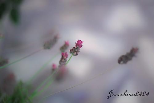 Aroma en el ambiente