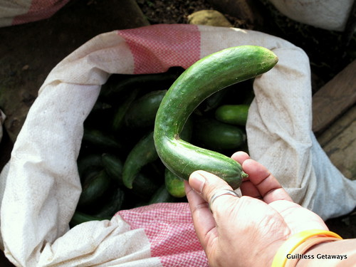 reject-rejected-cucumber.jpg