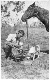 'Tis a hot day on patrol and water is scarce [outback mounted policeman pouring water into the top of his hat so his dog and horse can have a drink]