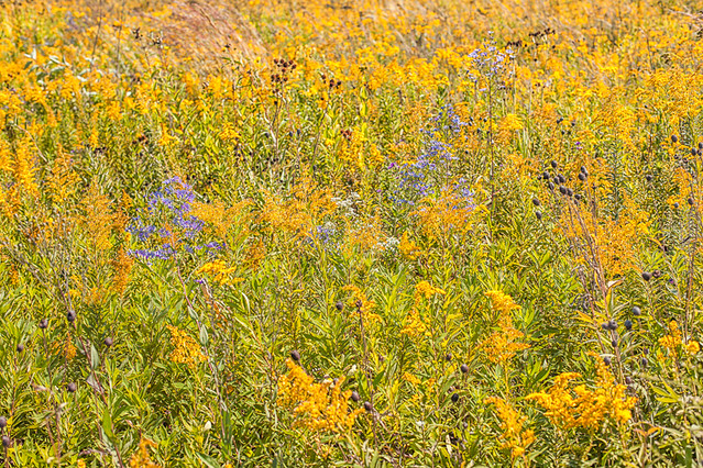 Prairie Flowers at Governor Nelson State Park