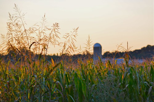 cornfield nikon highway farm northcarolina chapelhill mapleviewfarm d5100