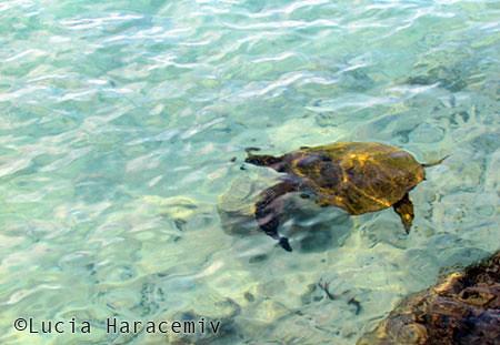 Hawaii-Lucia-Haracemiv-05
