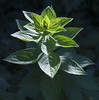 Botanic Gardnes-034