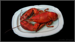 Happy National Lobster Day...