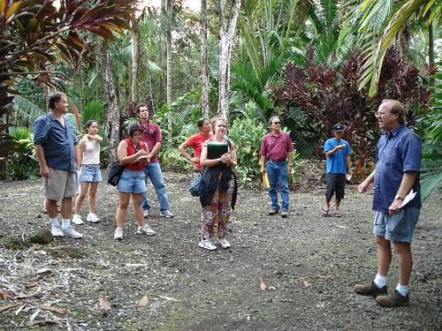 big island palm trip