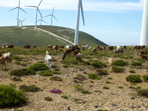 Portugal, 2 big dogs!! friendly