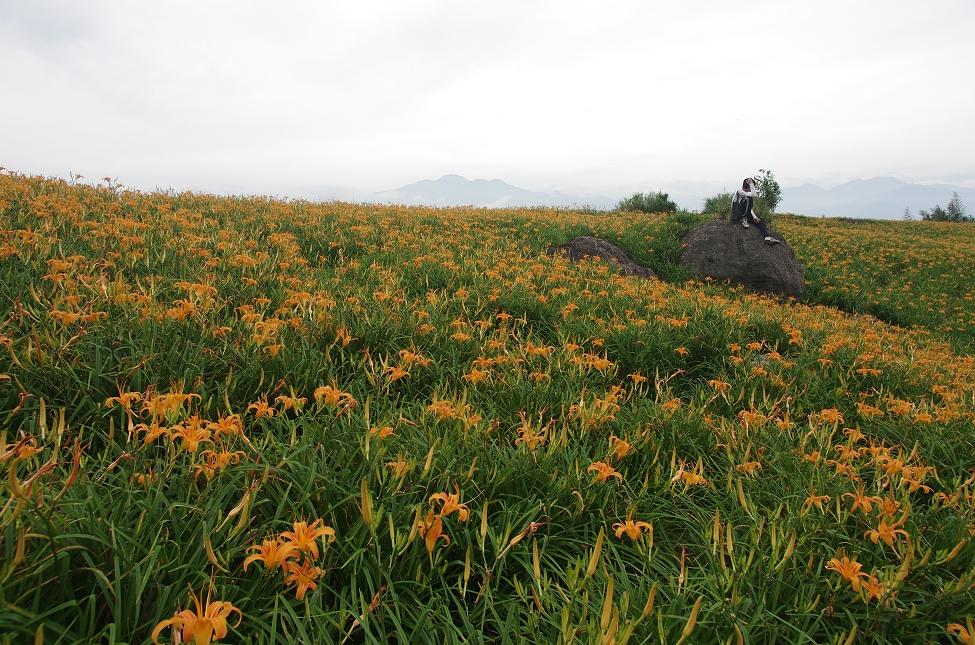 20120806六十石山金針花季開跑.
