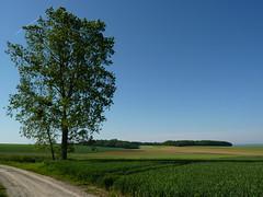 Un arbre, aussi - Photo of Barenton-sur-Serre