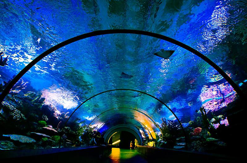 Океанариум Анталии