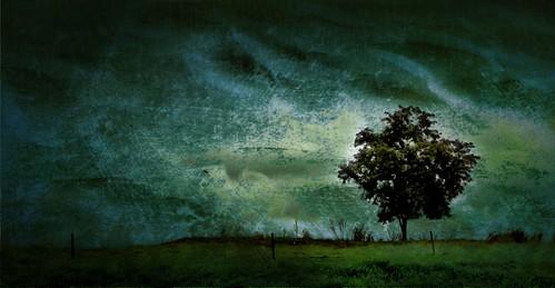 無料写真素材, 自然風景, 樹木, 草原・草