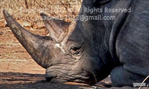 camp zoo adventure planet namibia animalplanet campsite centralafrica kalaharidesert subsaharian centralkalaharitrip