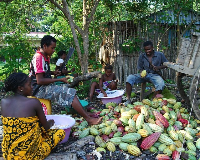 Farmers from Madécasse Chocolates in Madagascar removing cacao beans from pods.