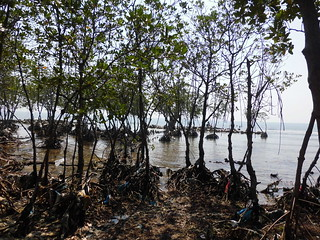 Just thing 'bout Mangrove  (41)