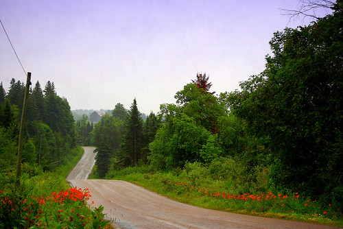 lillies of the road by tonnyc