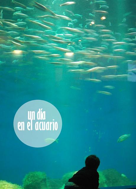 acuario_coruña