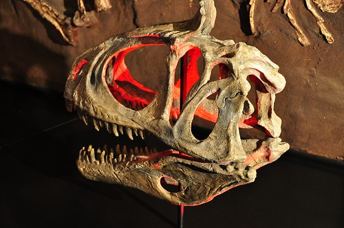 Australian Museum Dino Gallery