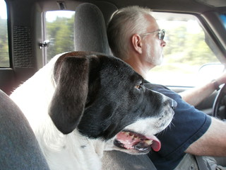 dogs, riding, truck, road trip,