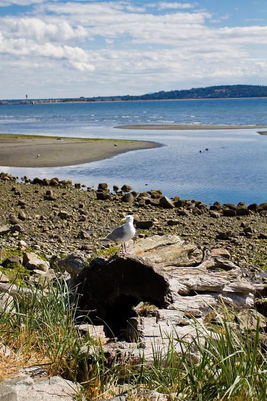 Sunny Beach in White Rock BC-061