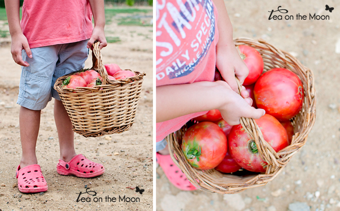 Huerto niños tomates 3