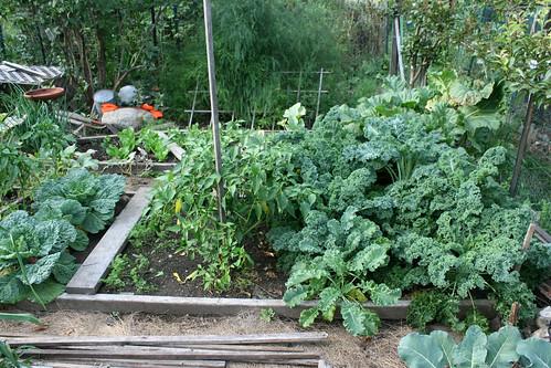 september garden plot 026