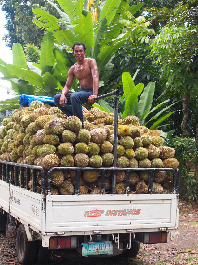 A beautiful truck full of durian