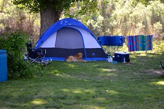 Well Behaved Dog by Tent