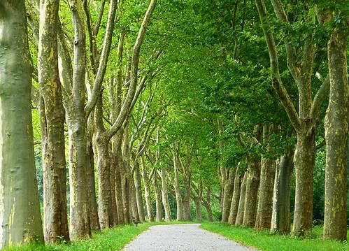 nature natureza avenue elms avenuetrees blinkagain bestofblinkwinners bewiahn