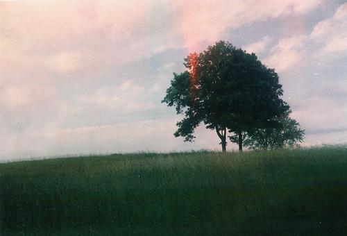 [フリー画像素材] 自然風景, 草原・草, 樹木 ID:201209242000