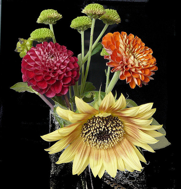 9-21-12 Two zinnias and a sunflower