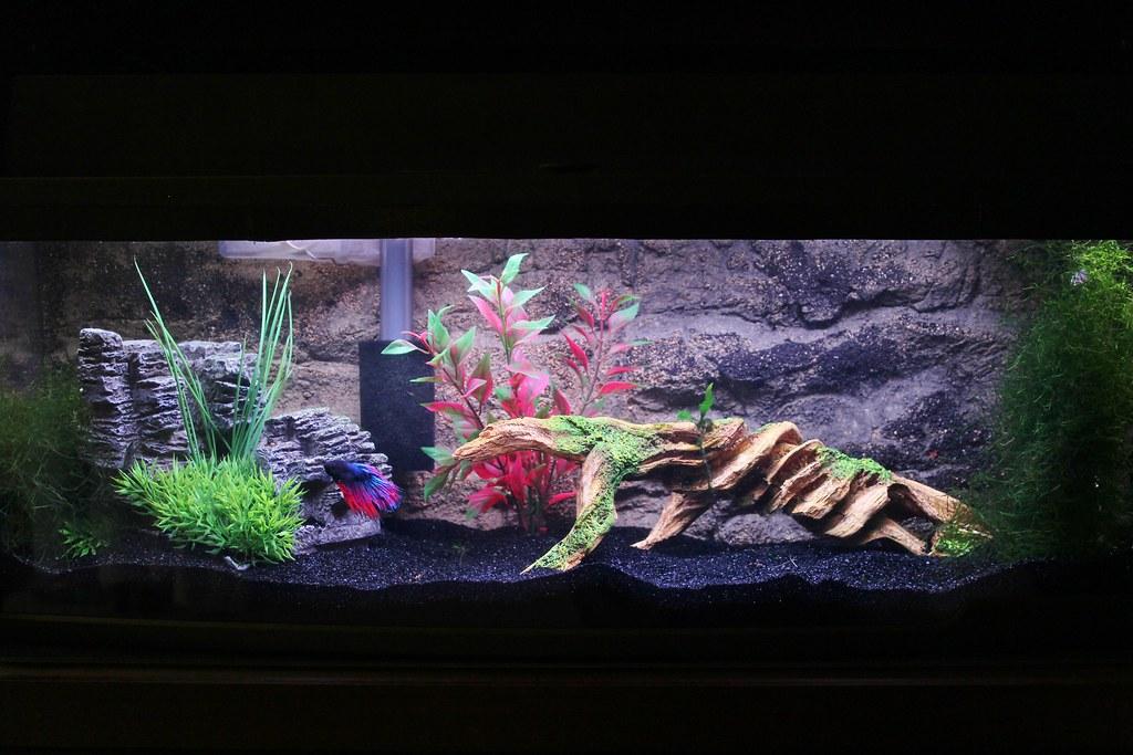 The petco bookshelf aquarium prepping for cherry shrimp for How much are betta fish at petco