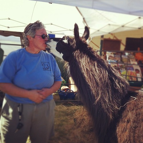 llama kisses #commongroundfair #cgcf2012