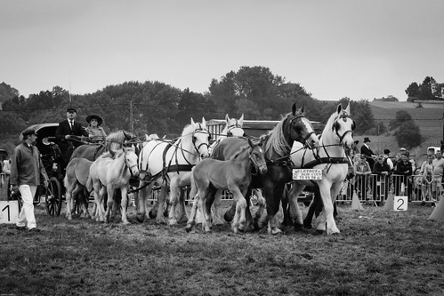 berthen nordpasdecalaispicardie france canon eos 1100d bw bnw noiretblanc blackandwhite flandre flanders horse horses cheval chevaux outdoor nature field trees champ arbres ciel sky convoy convoi transportation transport cart voiture people gens show contest foal poulain rural landscape paysage natur animals animaux digital ef2880mmf3556 blackwhitephotos blackwhite