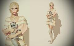 Artemis the Cat