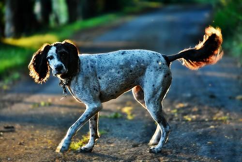 chemin août2016 soir evening coucherdesoleil sunset atardecer hélèna chien dog perro