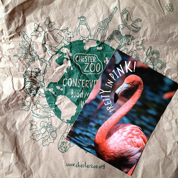 #flamingo #postcard #pink #bird #chester #zoo