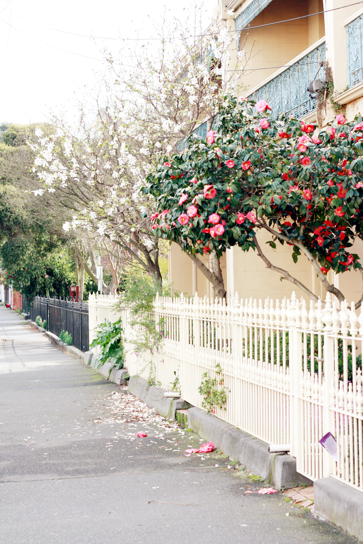 flowers victorian street fitzroy
