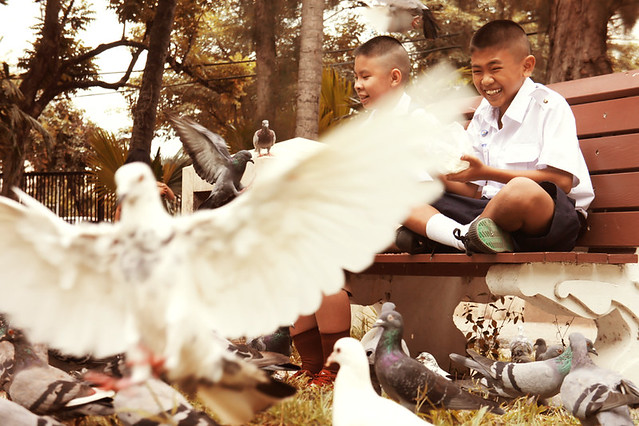 Not just for the oldies: the joy of feeding pidgeons at Suan Buak Hat