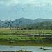 Palo Verde wetlands (Josh Joshi)