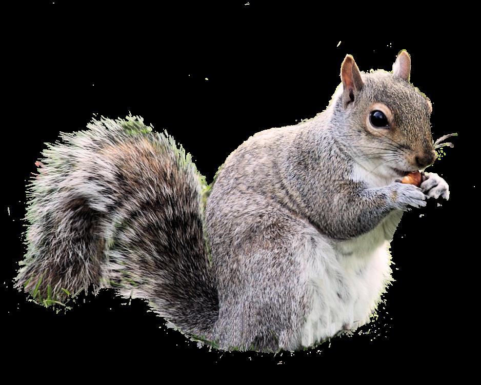 Squirrels Color Page