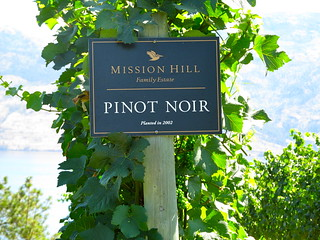 Misson Hill Pinot Noir grapes
