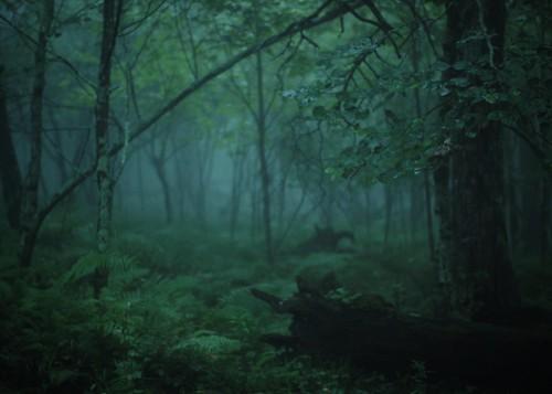 trees fog forest woods foliage wilderness mountainlake blueridgemountains amybuxton