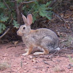 rabbit at the garden of the gods