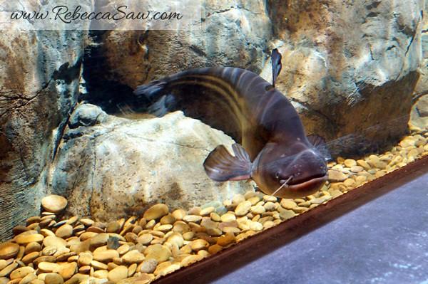 Singora Tram Tour - songkhla aquarium thailand-003