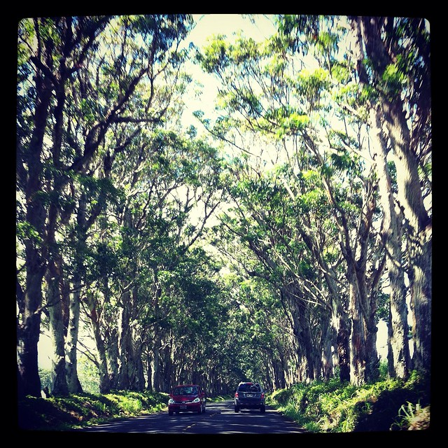 how to turn on light on iphone the tree tunnel on kauai s maluhia road flickr photo 20418