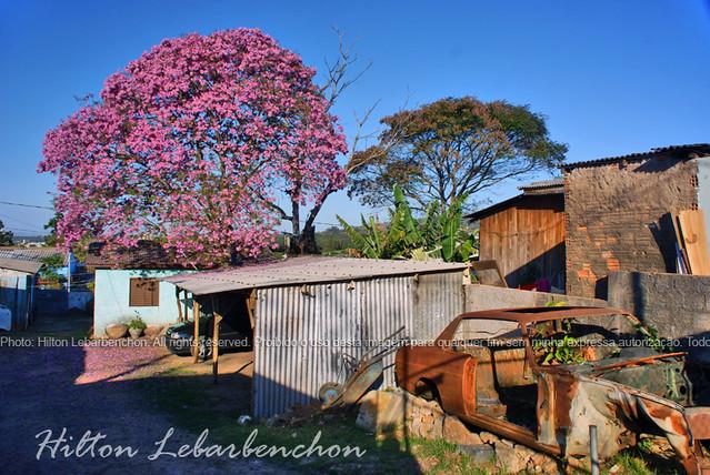 jardim ipe porto alegre:Ipê Roxo – Porto Alegre / RS – Vila Jardim